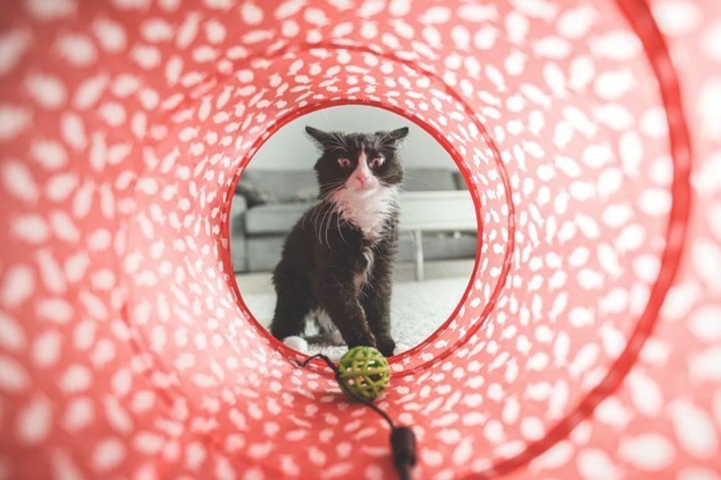 O lenistwie, zazdrości i kotach